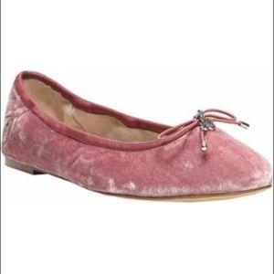 Sam Edelman Shoes - Sam Edelman Felicia velvet ballerina flats NWOT